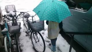 東京の雪情報をお伝えします!