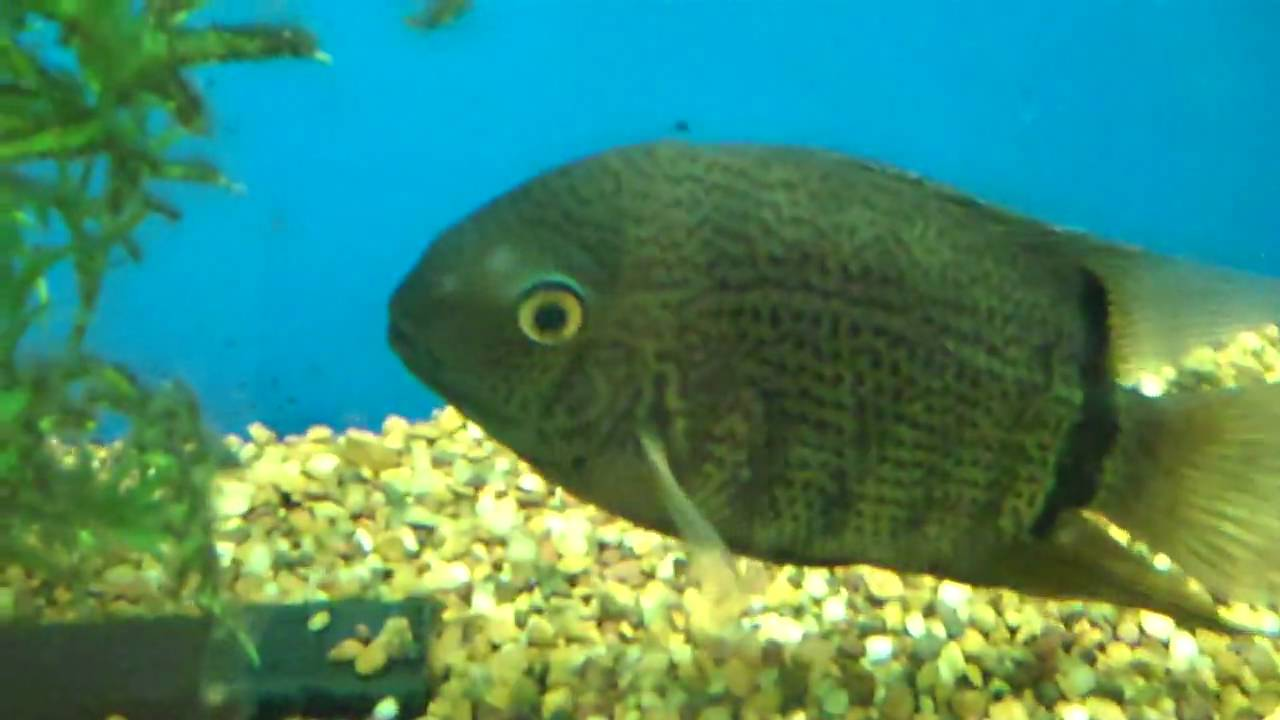Harp 39 s exotic fish pets tropical freshwater fish 6 for Jans tropical fish