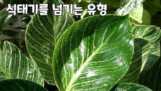 식물권태기를 이겨내고 넘기는 유형! 새로운 식물쇼핑? …