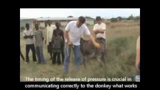 Donkeys aren't stubborn - The Donkey Sanctuary