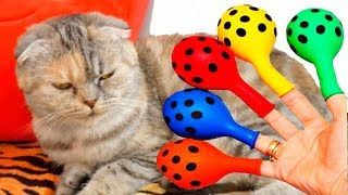 Animals Songs for Kids, Learn colors with Balloons & Nursery Rhymes for children song color