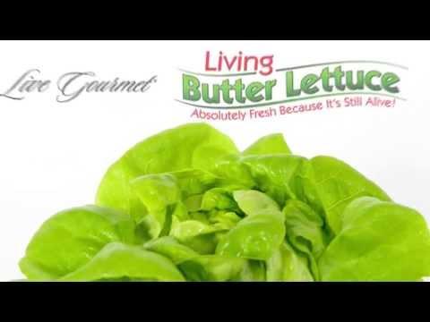 Live Gourmet Living Butter Lettuce