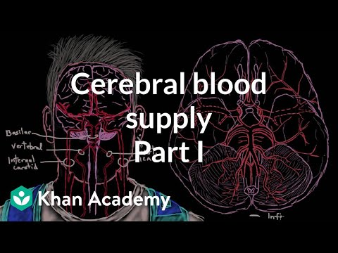 Cerebral blood supply: Part 1 | Circulatory System and Disease | NCLEX-RN | Khan Academy