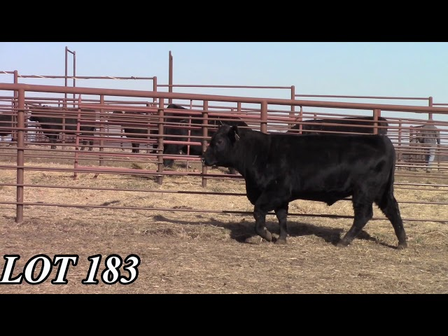 Mead Angus Farms Lot 183