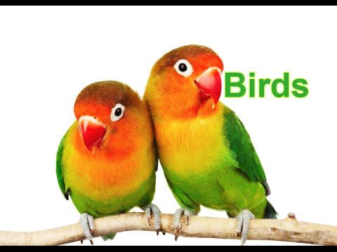 Birds (Part 1)_Nature Smart (MultiSmart - Multiple Intelligences)