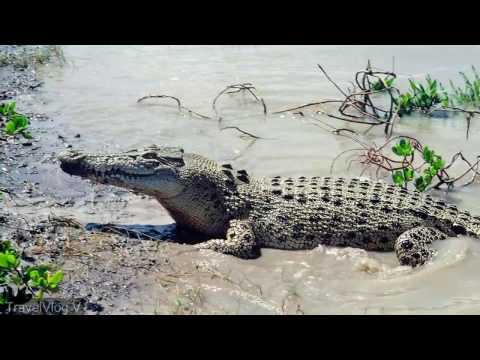 Andaman and Nicobar Island Tour Guide | Tourism | Giant Crocodile in andaman | Shape of you