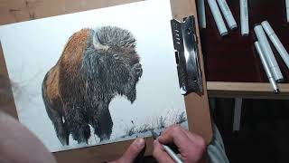 Drawing a Bison