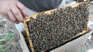 Popular Apiculture Related to Apps