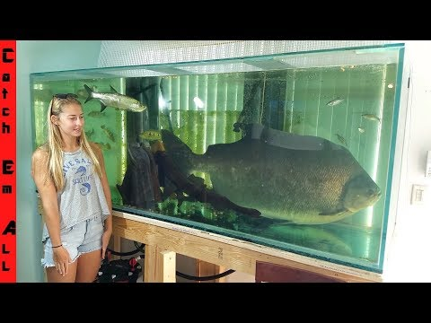 FISH TOO BIG to keep in HOME AQUARIUM!