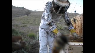 Working With Some Very Angry Bees