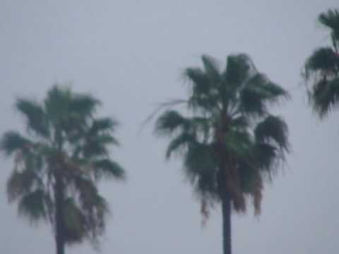 Trees in rainy weather in LA Cali
