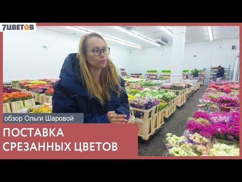 Срезанные цветы/Обзор поставки с Ольгой Шаровой