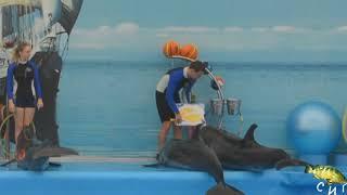 Как дельфины рисуют. Дельфинарий. Шоу дельфинов