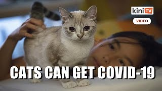 Study finds cats susceptible to Covid-19, but not dogs