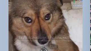 20 12 16 Стерилизация собак-проблема