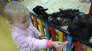 Алиса кормит животных в контактном зоопарке !!!