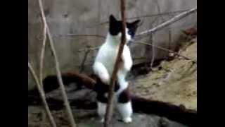 katis Striptizi