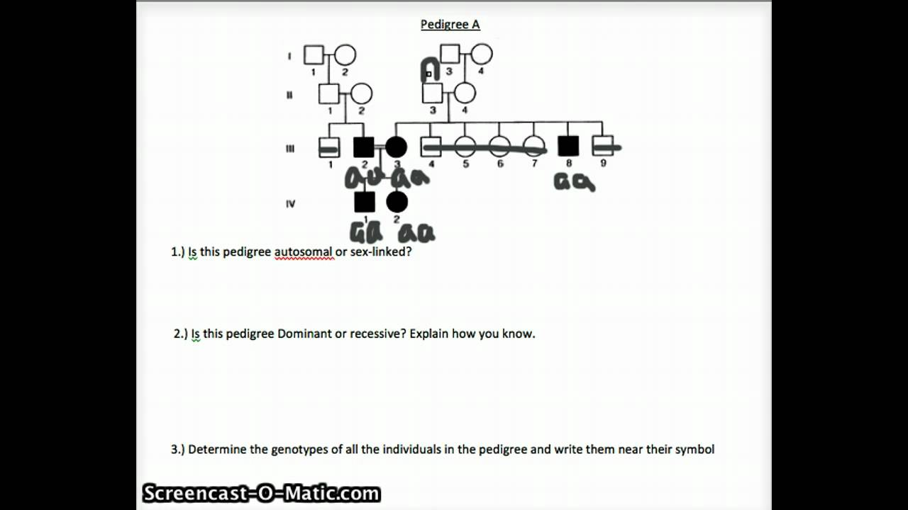 Pedigree Review Worksheet