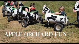 Apple Orchard Fun   Grandad's Apples