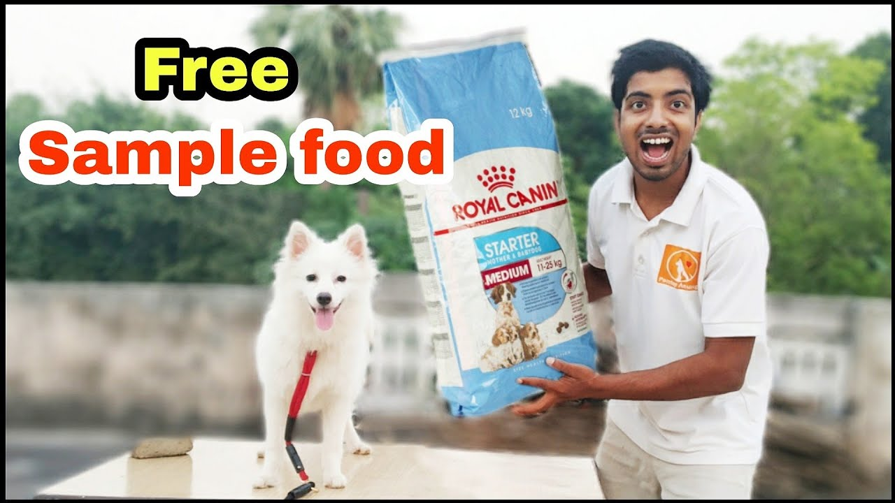 How to get free sample dog foods?