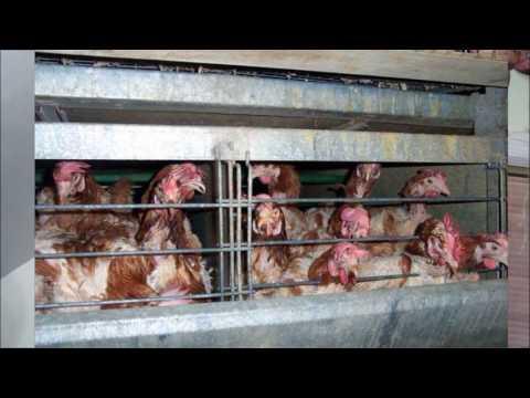 Animals Lives Matter Video Chat - Farming