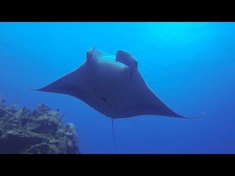 SCUBA Diving Grand Cayman