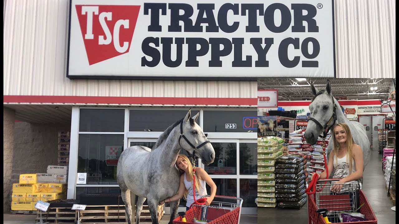 4db4d9e48d09 I TOOK MY HORSE INTO A TRACTOR SUPPLY STORE! - YouTube