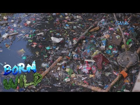 Born to Be Wild: San Juan River, one of Manila's biologically dead river