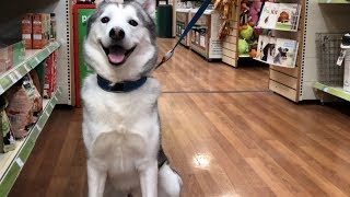 We Took My Sad Dog To The Dog Store to Buy ANYTHING he wants!!...  [FUNNIEST EXPERIENCE EVER!]