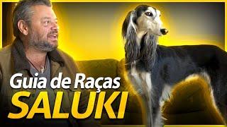 GUIA DE RAÇAS SALUKI | BAW WAW