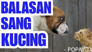 BALASAN DARI SANG KUCING| Beberapa Balasan Kucing terhadap Kebaikan Majikannya