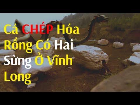 Phát hiện cá chép hóa rồng có 2 sừng ở Vĩnh Long | Discovered Dragon Carp in Vietnam