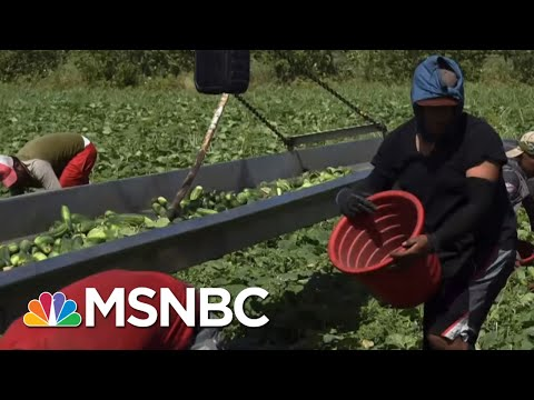 Chris Hayes: This Is What Essential Work Looks Like | All In | MSNBC