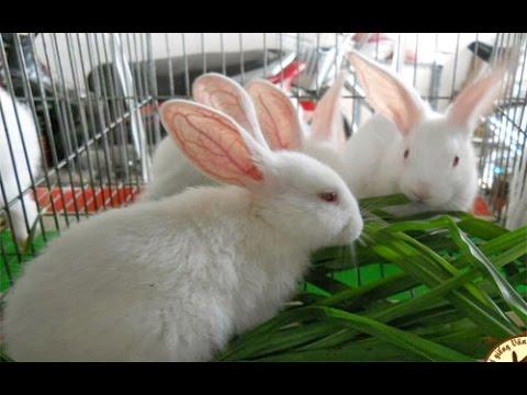 Mô hình nuôi thỏ Newzealand