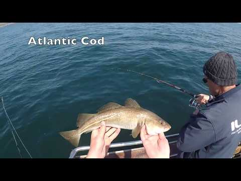Bottom Fishing For Cod And Pollock In Ireland, 5/23/18