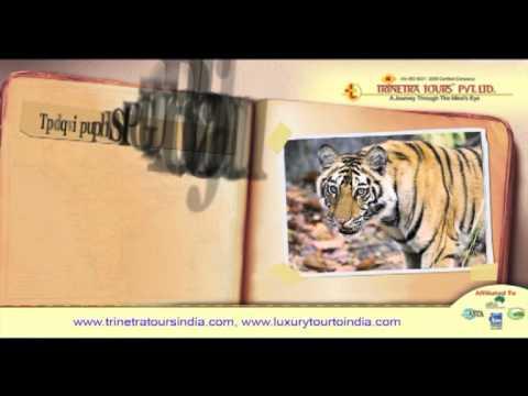 Film on Trinetra's India Tours