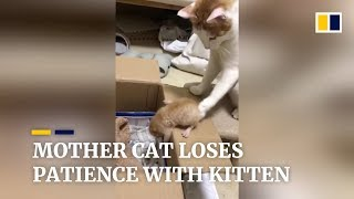 Mother cat loses patience with her kitten in China