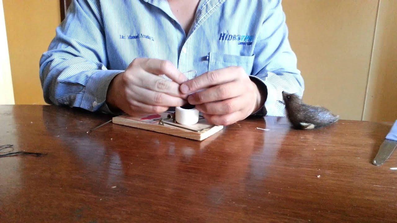 Como armar una trampa para ratones youtube - Trampas de ratones ...