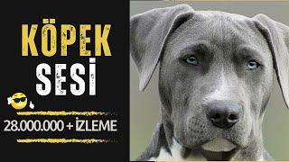 Köpek Sesi - Köpek Havlaması (GERÇEK) UZUN VERSİYON !