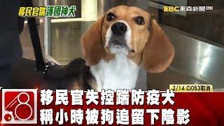 移民官失控踹防疫犬 稱小時被狗追留下陰影《8點換日線》2019.02.13