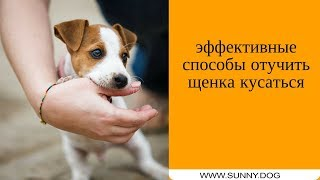 Отучаем щенка кусаться. Эффективные способы отучить кусаться.