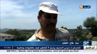 سكان بلدية بوثلجة بالطارف في رحلة البحث عن قطرات من ماء