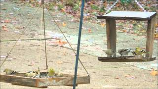 East Fork Bird Feeder Woodpecker