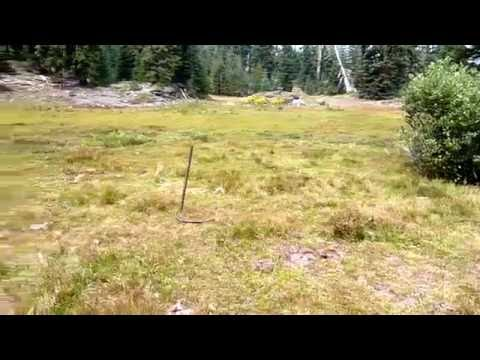 Grazing damage on Rogue-Siskiyou National Forest