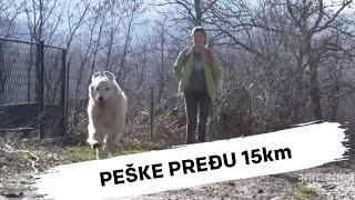 NJIH DVE SVAKI DAN PEŠKE PREĐU 15km ZAJEDNO:Teška životna priča devojčice Milice i njenog psa Lare