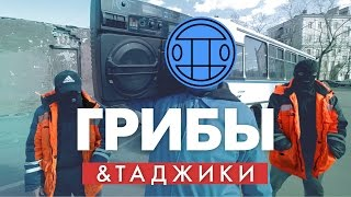 Таджики перепели