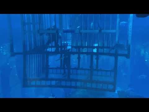 UAE. The Dubai Mall. Underwater Zoo. Аквариум в Дубай Молле.