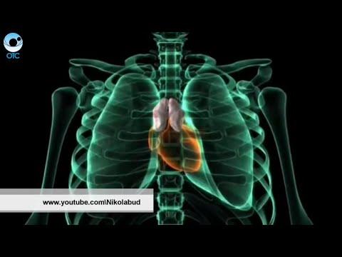 Рубрика PRO здоровье: загадки тимуса