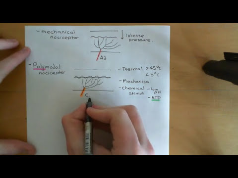 Pain and analgesic drugs Part 1