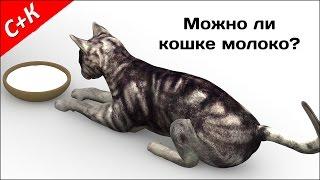 Можно ли кошкам молоко?